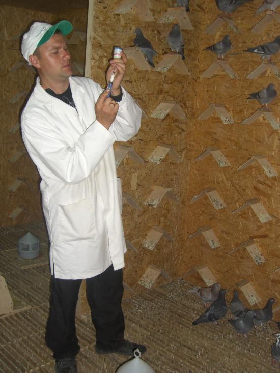 Vaccinare porumbei